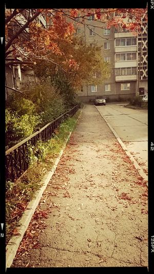 Короткая золотая осень?