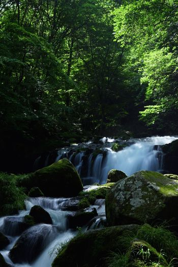 Waterfall Environment Nature Scenics Tranquil Scene Tree Forest Rainforest River Idyllic Landscape Flowing Water Water Tranquility Travel Destinations 蓼科大滝 Tropical Rainforest Environmental Conservation Beauty No People Social Issues Beauty In Nature Vacations in Chino, Nagano , Japan Flowing Water