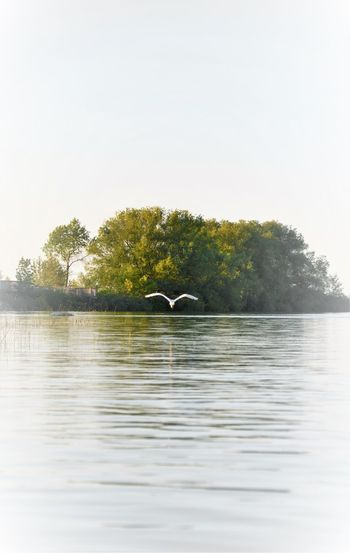 Landscapes With WhiteWall Nature White Background White Bird White Heron Ontario, Canada Bird Photography Nature Background Lake Bird Watching Nature