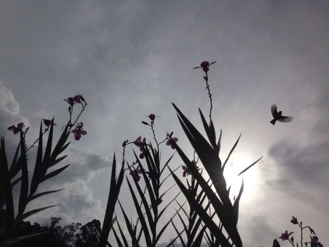 Bird Photography Siluet Nature Photography Flowers Sky And Clouds Sunlight Sin Filtros Colombia
