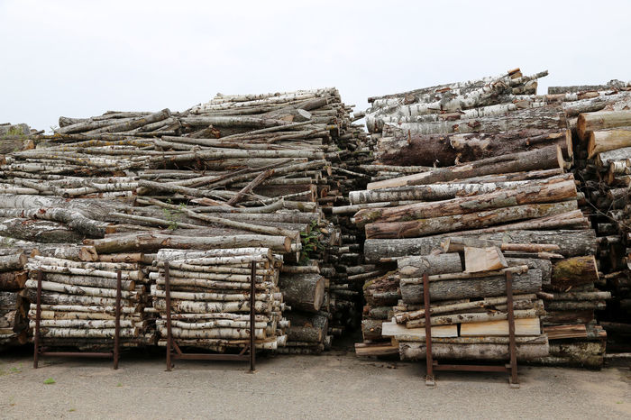 Birch wood lumber in big heaps ready to be burned at heating station in Latvia Abundance Arrangement Clear Sky Day Deforestation Environmental Issues Forestry Industry Heap Industry Large Group Of Objects Log Lumber Industry Nature No People Outdoors Pile Sky Stack Timber Wood - Material Woodpile Heating Period Heating Plant Heating Station