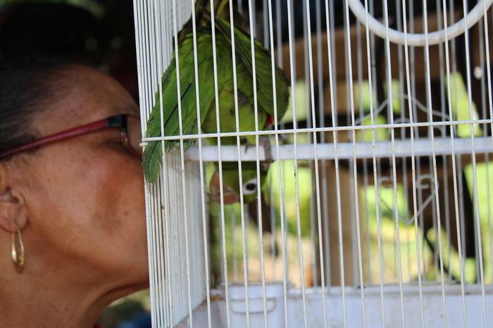 Visiting My Grandparents That's My Grandma Pet Bird Her Best Friend Kissing Her Bird Vacationing Dominican Republic Animal Bird Photography