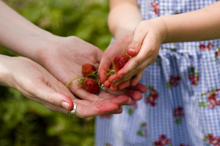 A young girl hands her mother the starwberries she has picked. Adult Child Childhood Close-up Day Finger Focus On Foreground Food Food And Drink Freshness Fruit Hand Healthy Eating Holding Human Body Part Human Hand Lifestyles Midsection People Real People Women