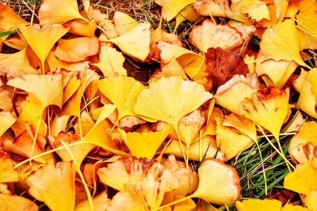 Nature Beautiful Leaves Golden Leaves Showcase: November