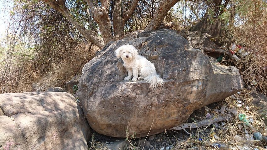 Big Rock Day Animal Themes Outdoors Nature No People Dog Dog On Rocks XperiaZ5 Xperiaphotography XPERIA Xperia Z5 Sony Xperia BYOPaper! Live For The Story Place Of Heart Pet Portraits