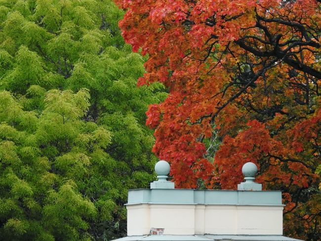 Red&green Autumn🍁🍁🍁 Colors Of Autumn The Week On EyeEm Lost In The Landscape EyeEmNewHere Been There. Cold Temperature Architecture Lomonosov Park Garden Nature North Forest Trees Freshness Colors Of Sankt-Peterburg Sankt-Petersburg Russia