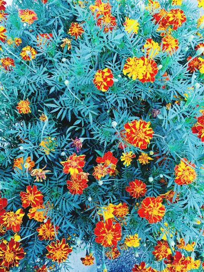 Flowers Flower Flowering Plant Plant Growth No People Fragility Orange Color Freshness Full Frame Vulnerability  Beauty In Nature Backgrounds Day Nature Inflorescence Green Color High Angle View Flower Head Petal