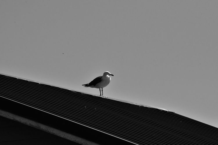observing Ineffable Life Photography And Art Seagull Bird Perching Animal Themes Sky Roof Roof Tile Rooftop Sea Bird The Minimalist - 2019 EyeEm Awards