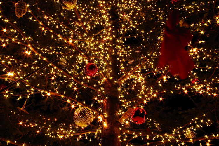 Christmas Tree Night Celebration Illuminated Glowing No People Outdoors Tree Low Angle View Christmas Decoration