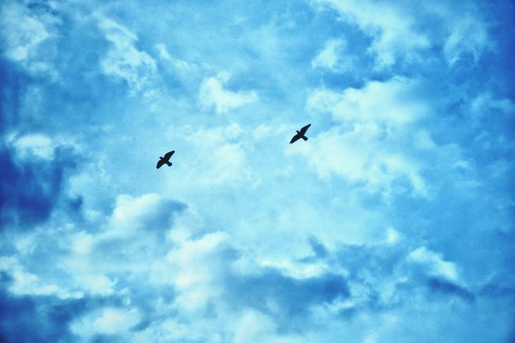 HIGH - Flying Bird Sky Animal Themes Low Angle View Nature Blue Cloud - Sky No People Animals In The Wild Outdoors Beauty In Nature Spread Wings Day Doves Eyeem Philippines EyeEm Phillipines EyeEm Vision Dove Love Pet Portraits Perspectives On Nature #FREIHEITBERLIN The Still Life Photographer - 2018 EyeEm Awards The Great Outdoors - 2018 EyeEm Awards