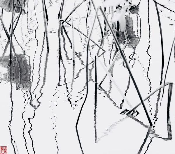 水墨残荷 Backgrounds Ink Water Nature No People Day Outdoors