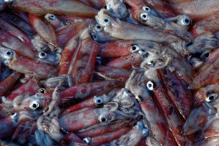 Full frame shot of fresh squids at fish market stall