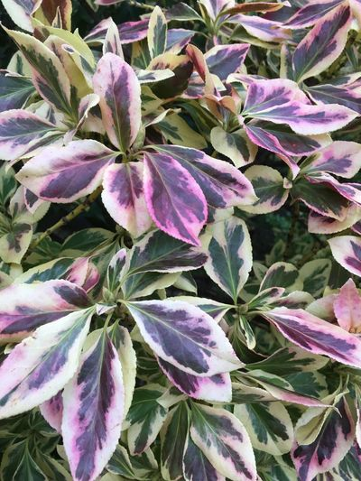 Nature Plant Leaf