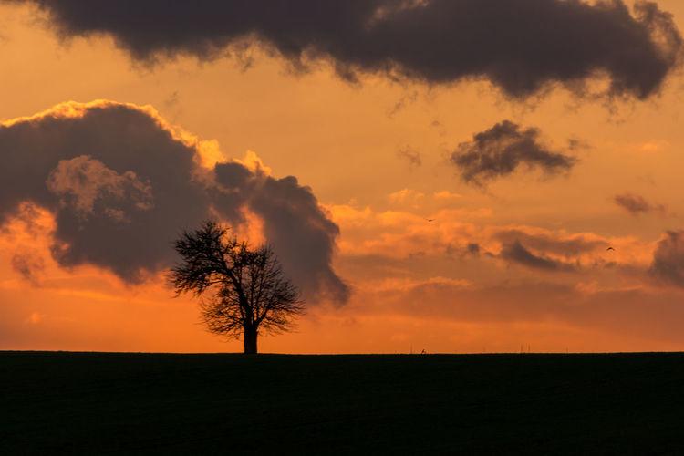 Lonely tree Baum Evening Light Evening Sky France Frankreich ♥ Lorraine Lothringen Obstbäume Sunset Tree