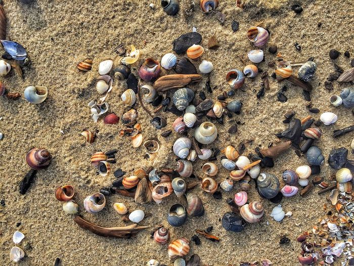 Sand Full Frame Beach Land Sunlight Nature Shell No People Backgrounds Day High Angle View Large Group Of Objects Abundance Seashell Outdoors Animal Shell Still Life Choice Sea Variation