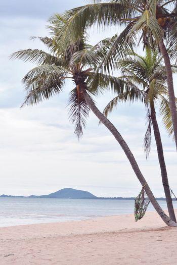 🏝🏝 Palm Tree