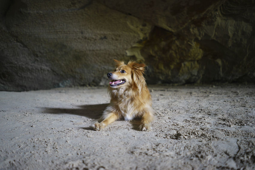 Animal Themes Brown Cave Dog Domestic Animals Fregona Grotte Del Caglieron Half Caste Indoors  Italy Looking Away Mammal No People One Animal Pets Portrait Sticking Out Tongue Pet Portraits