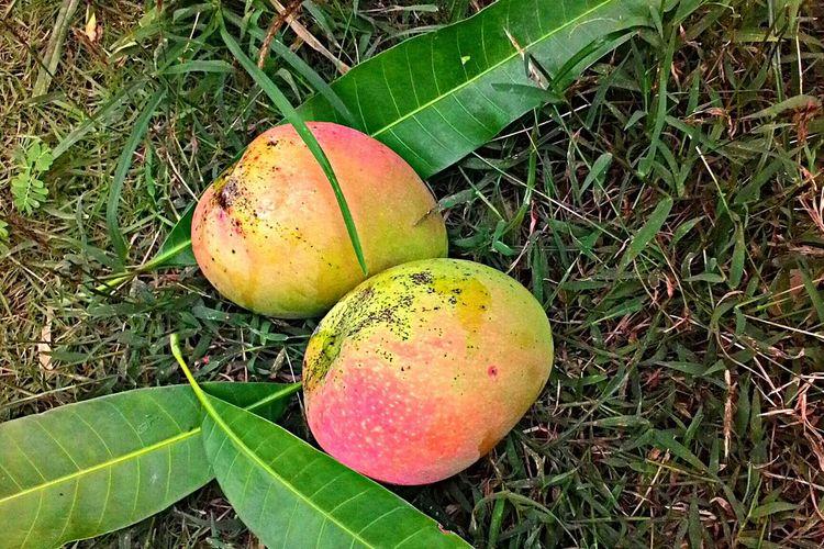Tropical Fruits Applemango