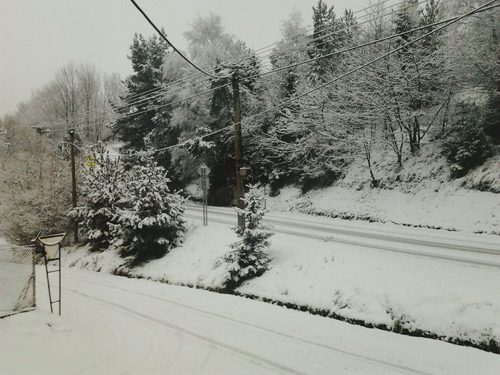 Vanishing Point Myvillage Winter2014 Firstsnow FirstSnow2014 Trees Snow Winter Winterland