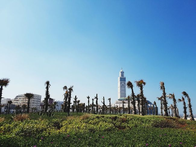 HASSAN II Mosque, Casablanca Casablanca Morocco Moroccan Atlantic Ocean Sky Clouds Contrast Serinity Secnic View Mosque Mosque Architecture Religion Religious  Spirituality Spirituel Mosques Of The World Sky Outdoors Clear Sky Growth Nature Day Grass