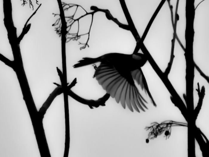 Animal Themes Animals In The Wild Bird Feathers Flying Fragile Learn&shoot:balancing Elements LUMIX GX8 Nature_collection Sky Spread Wings Tree Wildlife Photography In Motion Showcase April Showing Imperfection Nature's Diversities From A Bird's Eye-view capturing motion Waiting Game