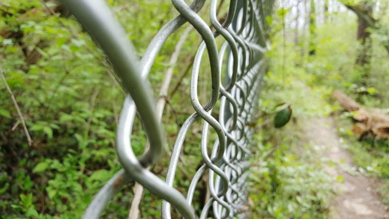 Selective Focus Wire Fence Fence Metal Fence WoodLand Outdoors Protection Security Safety Close-up Lush Green Green Color Nature Conservation
