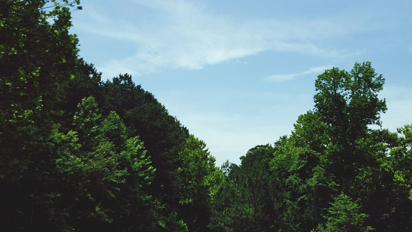 Sky And Trees Serene Scene Verdant In Living Color EyeEm Nature Lover Protecting Where We Play