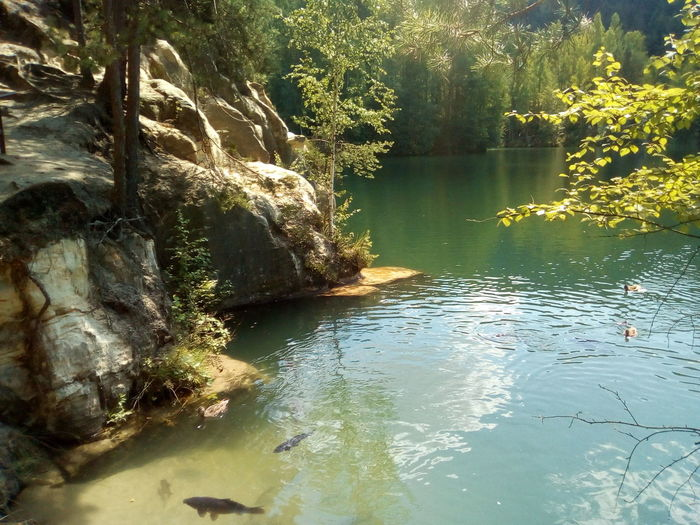 Berg See Fische