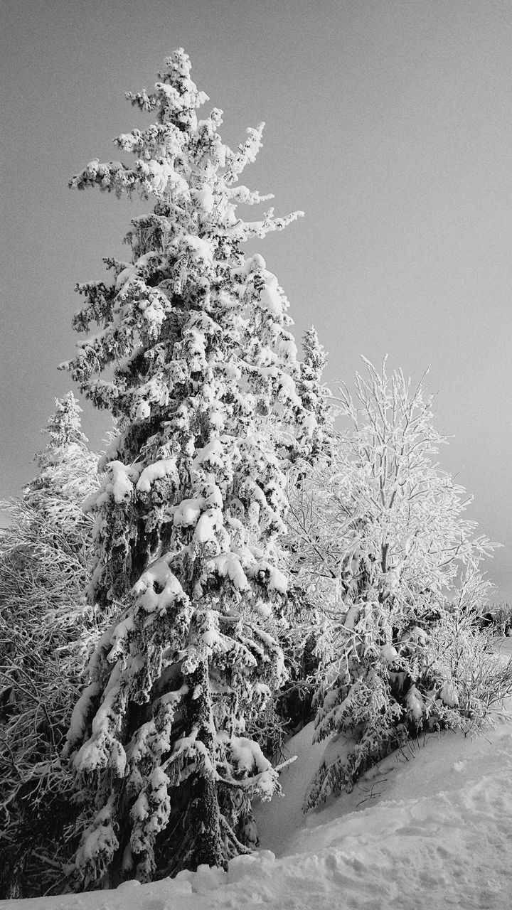 tree, plant, cold temperature, winter, sky, snow, beauty in nature, no people, tranquility, nature, clear sky, day, tranquil scene, land, covering, growth, scenics - nature, frozen, outdoors