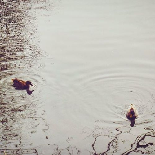 Cute little ducks from Friday Duck Canal Water Viewbugfeature Myphoto MyPhotography