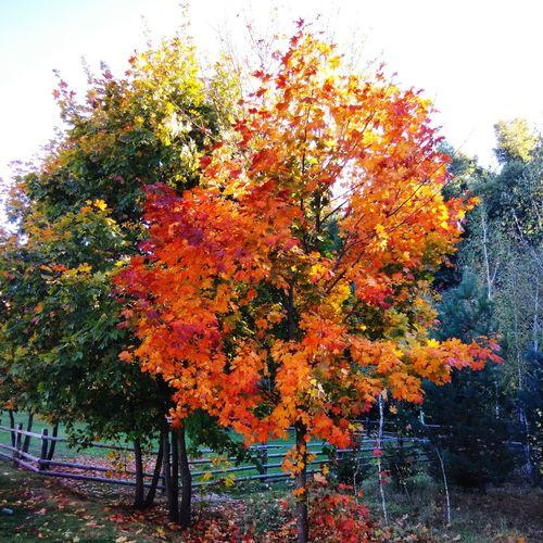 Autumn Trees Nature Life Ukraine Colorful Popular
