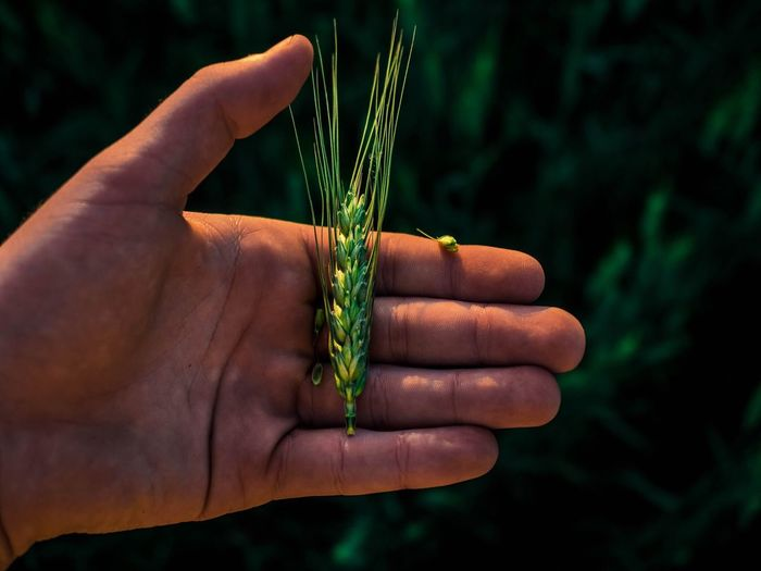Cropped hand of man holding crop