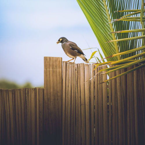 Bird on a fence. Animal Wildlife Animals In The Wild Bird One Animal Fence Outdoors Day Animal Tropical Climate Tropical Paradise