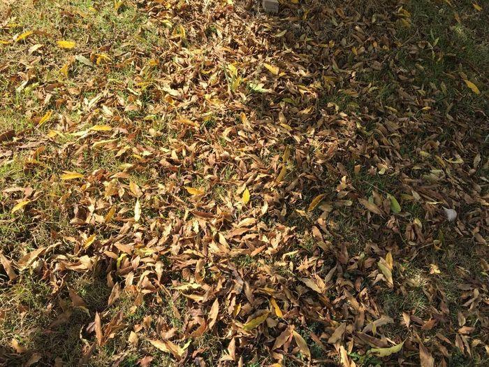 Auttumn Leaves Fall Leaves Leaves