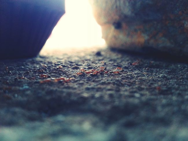 Ant Photography Awesome Deceptively Simple I Show The World What I See Lights And Shadows