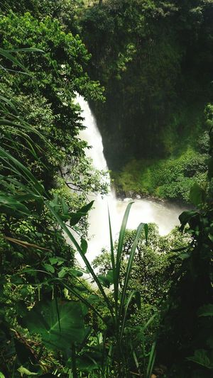 Hidden Gems  Falls 🌊 Water Nature Beauty In Nature Tranquility Outdoors Forest North West Region Cameroon Highlands Cameroon