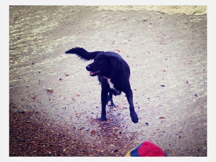 High angle view of dog standing on ground
