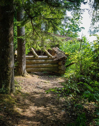 Nimkish Valley near Woss, British Columbia Tree Plant Nature Architecture Built Structure Forest Growth No People Day Land Tranquility Outdoors Green Color History Sunlight Tranquil Scene Footpath Solid Travel Destinations Stone Material WoodLand Log Cabin