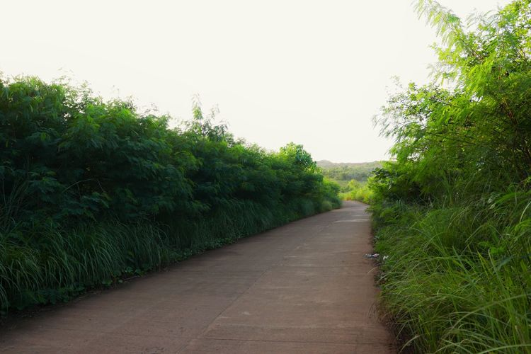 Footpath amidst trees against clear sky