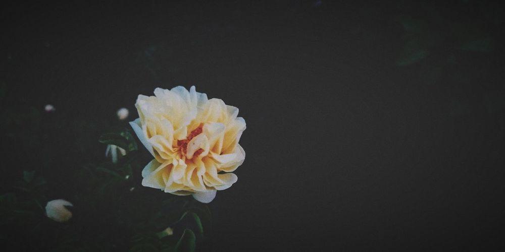 Flower Close-up Petal