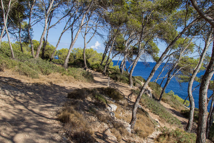 Baleares Beauty In Nature Hike Hiking Nature Path Tourism Finding New Frontiers Perspectives On Nature