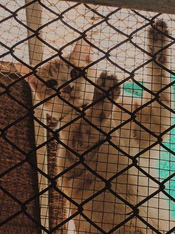 CAT next door Cat Lovers Climbing Animal Cat Naughty Cat Curious Love Close-up Day