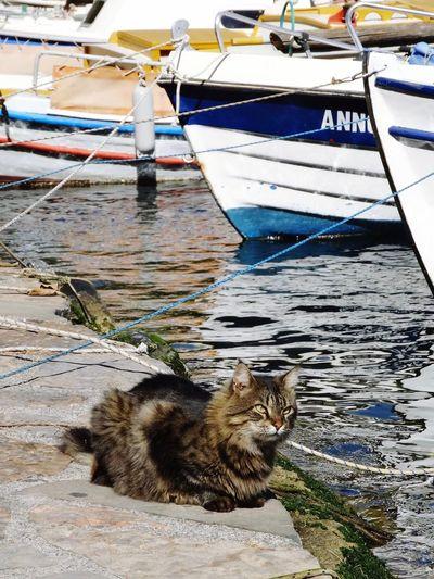 Cat Greece, Crete Greece Crete Boat Bateau Instamood Instagood Pet Portraits