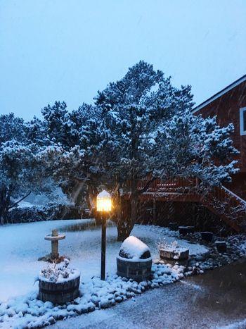 Showcase: November Snowscape Colorado Photography Snowing