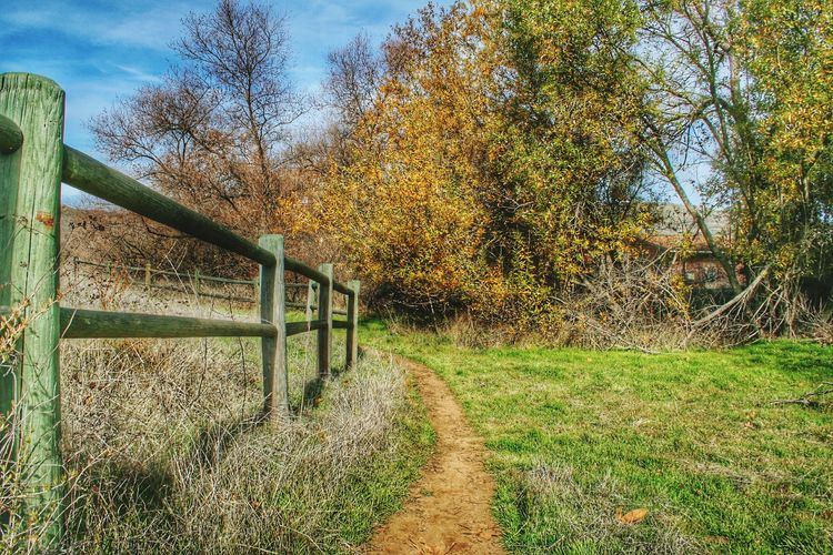Tree The Way Forward Fence Tranquility Tranquil Scene Grass Growth Railing Footpath Nature Field Solitude Branch Outdoors Day Plant Sky Scenics Non-urban Scene Remote