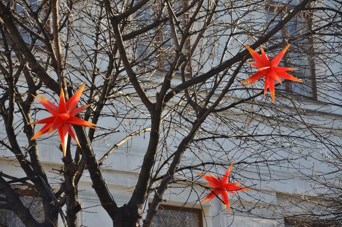 Bare Tree Christmastime Day Decoration Maple Leaf No People Orange Color Ornaments Outdoors Red Season  Stars Tradition X-mas