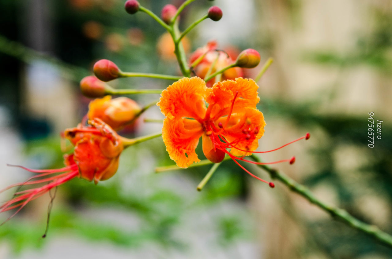 focus on foreground, nature, growth, beauty in nature, flower, plant, no people, close-up, day, petal, fragility, outdoors, freshness, flower head
