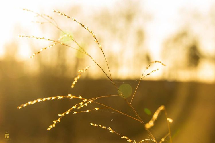 Golden hour Nature Sunlight Plant Close-up No People Uncultivated Brown Outdoors Growth Sunbeam Beauty In Nature Rvmphotography Rvmphotography.us Canonphotography Canon_photos Team Canon Canon600D
