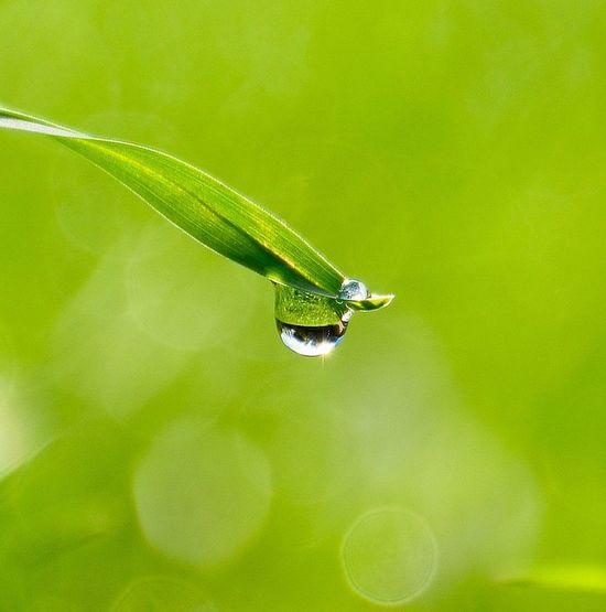 Close-up Macro Photography Droplet Droplets, Water Droplets, Flowers  Droplet On Grass Grass Grass Blades Droplets Macro Drop Water