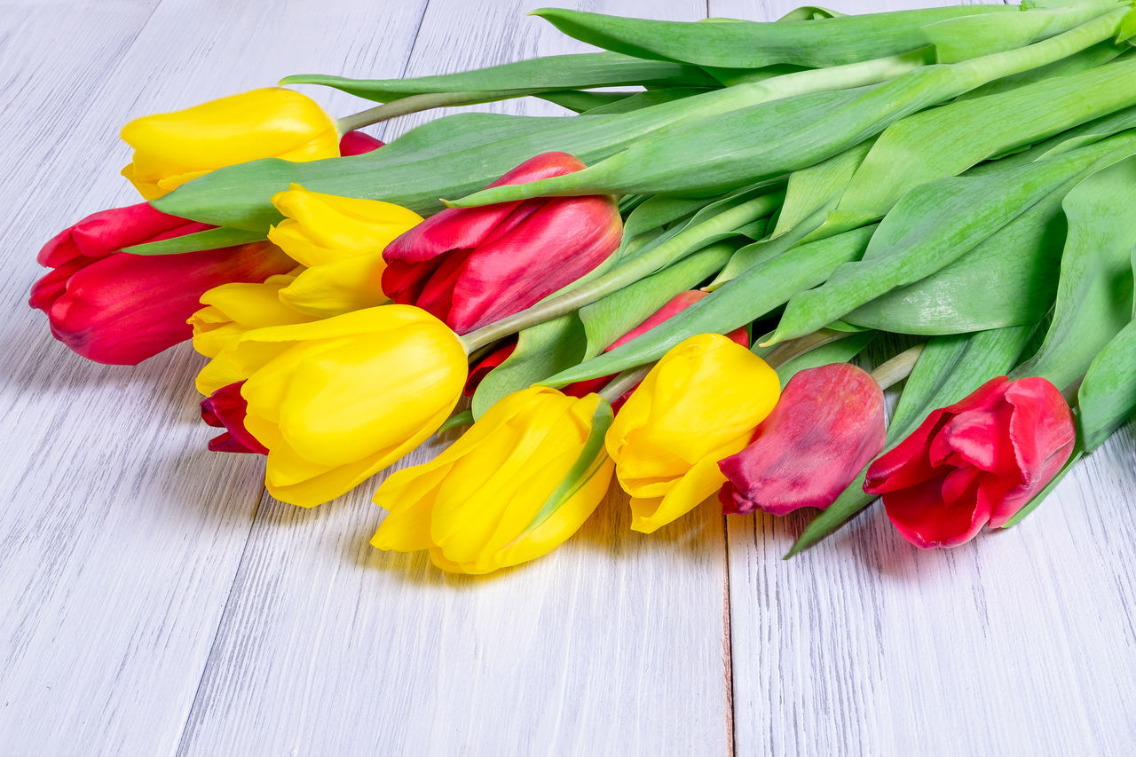HIGH ANGLE VIEW OF MULTI COLORED TULIPS IN VASE
